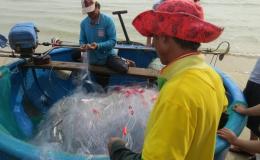 Cá đối Gò Công