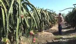 Chuyên đề 24.02 – Tấm gương nông dân sản xuất giỏi