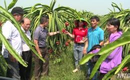 Tập đoàn Central Group khảo sát tiêu thụ thanh long Tiền Giang
