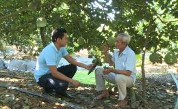 """Cây lành trái ngọt """"Chăm sóc vườn cây ăn trái ứng phó hạn mặn"""""""