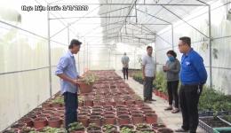 Chuyên đề 08.4 – Mô hình trồng sâm của anh Trần Thanh Quý