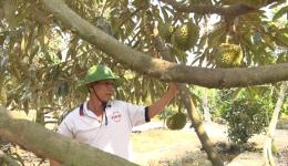Chuyên đề 27.5 – Làm giàu từ mô hình cây sầu riêng