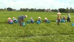 Chuyên đề 29.5 – Các hoạt động sản xuất nông nghiệp những tháng đầu năm
