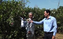 Chuyên đề 08.5 – Chuyển đổi cây trồng có hiệu quả