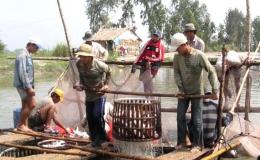 Gỡ khó xuất khẩu cá tra