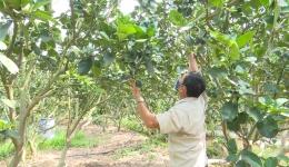 Chuyên đề 22.5 – Gương nông dân sản xuất kinh doanh giỏi