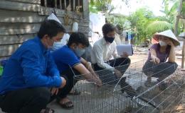 Chuyên đề 15.5 – Mô hình nuôi chồn hương ở Tân Phước