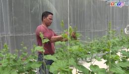 Mô hình trồng dưa lưới trong nhà màng đem lại hiệu quả kinh tế cao