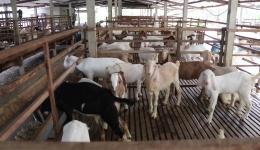 Chuyên đề 12.6 – Các hoạt động sản xuất nông nghiệp và kết quả tái cơ cấu ngành nông nghiệp