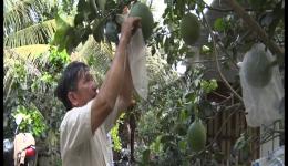 Chuyên đề 01.6 – Chuyển đổi cơ cấu cây trồng phù hợp với hướng phát triển bền vững