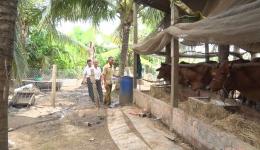 Chuyên đề 24.6 – Cựu chiến binh Võ Tấn Vui phát triển kinh tế từ mô hình chăn nuôi