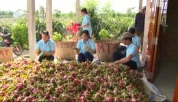Tiền Giang kết nối 24h (02.7.2020)