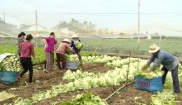 Những mô hình sản xuất, chế biến nông sản sạch