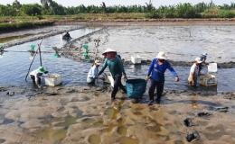 Phát triển thêm 450.000 hecta trái cây và thủy sản ở ĐBSCL đến năm 2030
