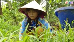 Hoàn cảnh em Nguyễn Huỳnh Kim Thi – Lớp 11A2 trường THPT Phan Việt Thống