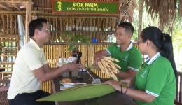 """Cây lành trài ngọt """"Mô hình trồng dừa thu mật"""""""