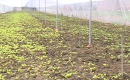 Mô hình trồng rau trong nhà lưới