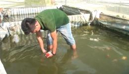 Chuyên đề 14.9 – Nông dân Mỹ Hội thoát nghèo nhờ nuôi cá kiểng