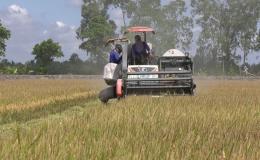 Chuyên đề 29.9 – Nông dân huyện Cai Lậy phấn khởi vì làm lúa trúng mùa, được giá