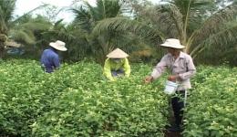 Chuyên đề 18.9 – Hội nông dân TPMT với những kết quả nổi bậc trong việc thực hiện phong trao thi đua yêu nước