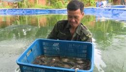 Chuyên đề 16.10: Mô hình nuôi cá chạch thương phẩm tại xã Trung An