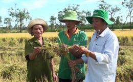 Chuyên đề 09.10 – Nông dân thu hoạch vụ lúa hè thu năm 2020