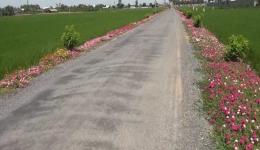 Chuyên đề 23.10 – Xã Tân Đông đạt chuẩn nông thôn mới nâng cao