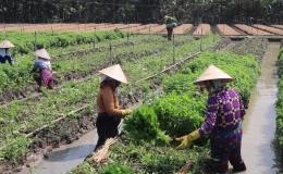 Chuyên đề 13.11 – Kết quả xây dựng xã nông thôn mới của xã Thạnh Phú
