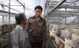 Chuyên đề 28.10 – Mô hình trồng nấm mối đen hữu cơ