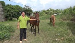 Nghề nuôi ngựa truyền thống vẫn còn tồn tại và mang lại giá trị kinh tế cao