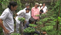 Chuyên đề 19.11 -Tổng kết lớp nghề trồng và chăm sóc cây kiểng ở xã Phú Thạnh