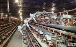 Sở NN&PTNT Tiền Giang khảo sát các mô hình sản xuất nông nghiệp tại các địa phương