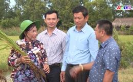 Tân Phú Đông sản xuất nông nghiệp hữu cơ hướng đến công nghệ cao