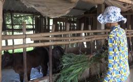 Chuyên đề 15.12 – Mô hình giúp phát triển kinh tế gia đình vươn lên thoát nghèo bền vững