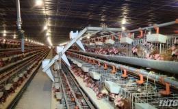 Tiền Giang dẫn đầu các tỉnh ĐBSCL về chăn nuôi gia cầm