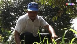 Chuyên đền 18.1- Gương nông dân sản xuất giỏi ở xã Hậu Mỹ Phú