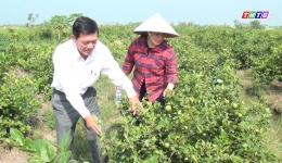 Chuyên đề 01.01 – Mô hình trồng chanh tứ quý mang lại thu nhập ổn định