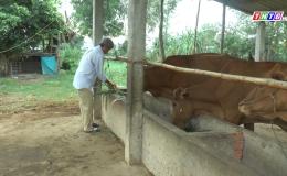 Chuyên đề 14.01- Mô hình chăn nuôi bò kết hợp trồng sả mang lại hiệu quả kinh tế cao