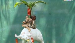 Dừa bonsai – sản phẩm mới lạ cho mùa kiểng Tết Tân Sửu