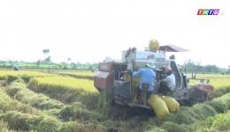 Chuyên đề 26.02 – Nông dân Gò Công Đông thu hoạch lúa trúng màu được giá
