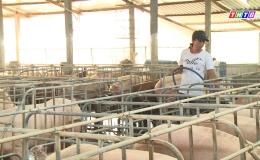 Chăn nuôi Tiền Giang chuyển dần sang hình thức trang trại