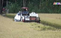 Chuyên đề 09.3 – Gò Công Tây thu hoạch lúa đông xuân