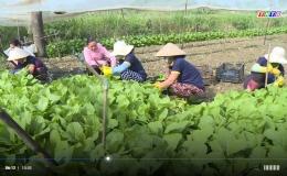 Tiền Giang hướng đến sản xuất nông sản an toàn