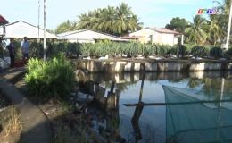 Chuyên đề 05.4 – Chợ Gạo nỗ lực phòng chống hạn mặn bảo vệ cây trồng