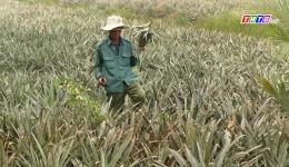 Nông dân Tân Phước thay đổi tư duy trong sản xuất nông nghiệp