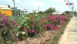 Chuyên đề 08.4 – Ấp Bà Tiên 2, xã Phú Đông trên đường xây dựng nông thôn mới