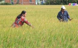 Chuyên đề 21.4 – Hiệu quả từ phong trào giúp nhau xóa đói giảm nghèo