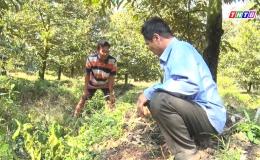 Chuyên đề 12.5 – Hiệu quả vườn chuyên canh ở xã Long Khánh