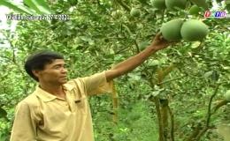 Chuyên đề 07.6 – Cái Bè triển vọng trái cây xuất khẩu, tăng thu nhập kinh tế vườn
