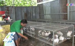 Chuyên đề 12.7- Các mô hình chăn nuôi khởi nghiệp của thanh niên xã Long Bình Điền và Tân Thuận Bình